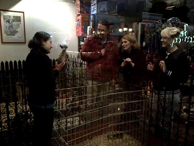 Alessandra Stoicescu si sotul ei s-au indragostit pe loc de un pui de chihuahua.
