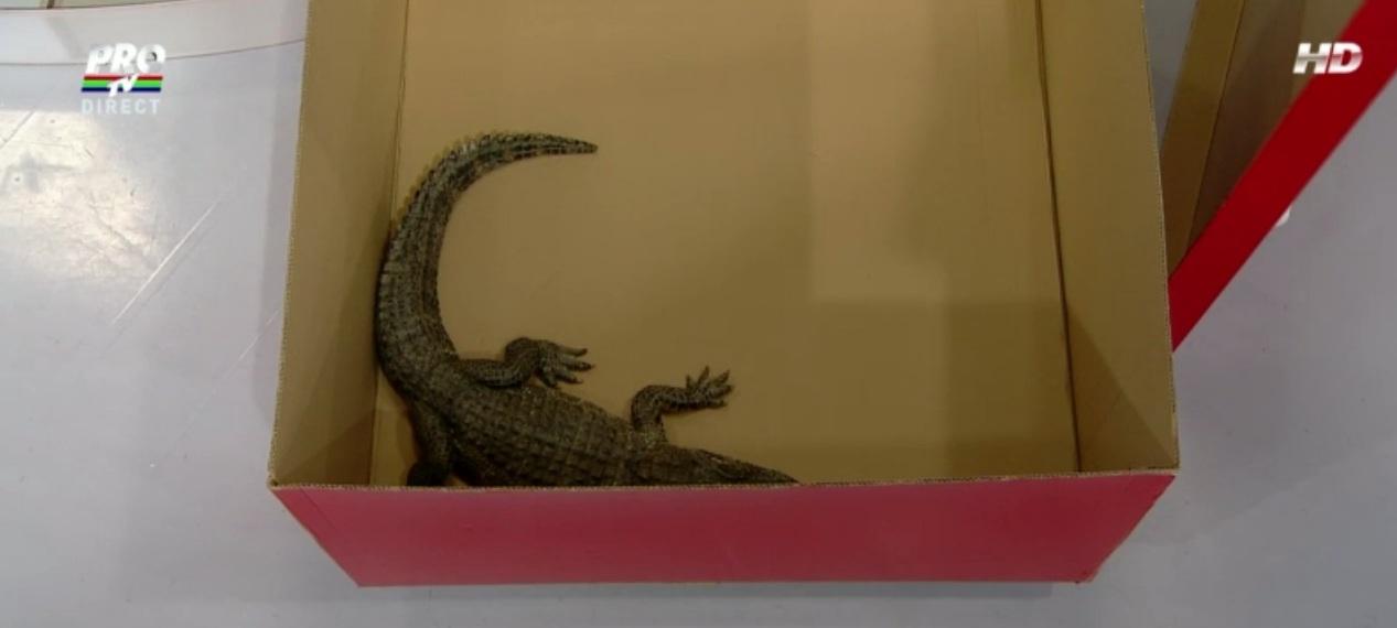 Viorica Din Clejani a primit un crocodil