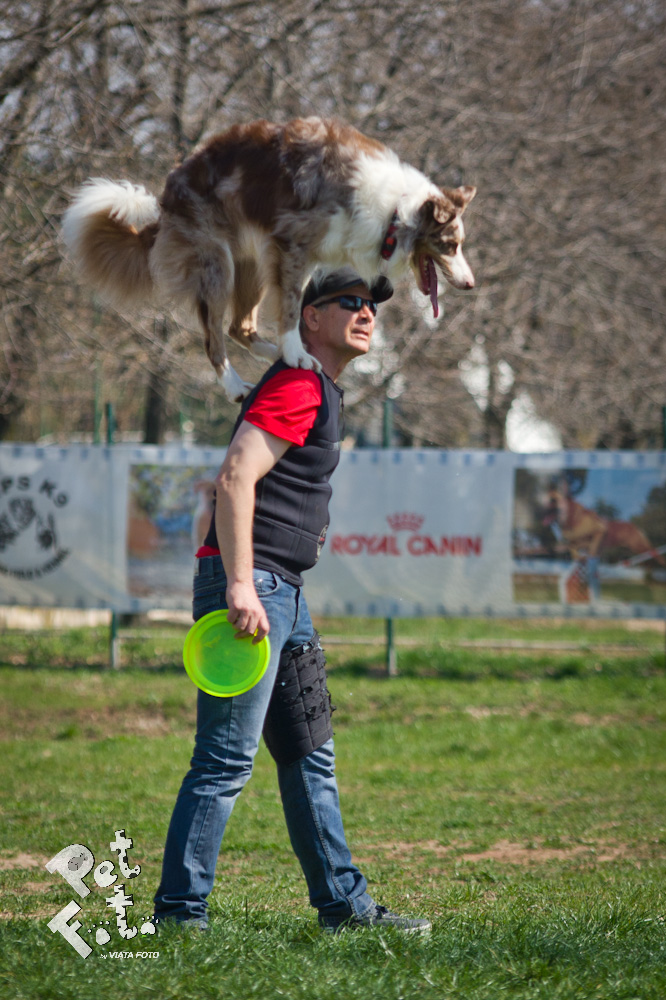 Bruno Icobet si Ozzie fac un adevarat spectacol impreuna foto: Pet Foto