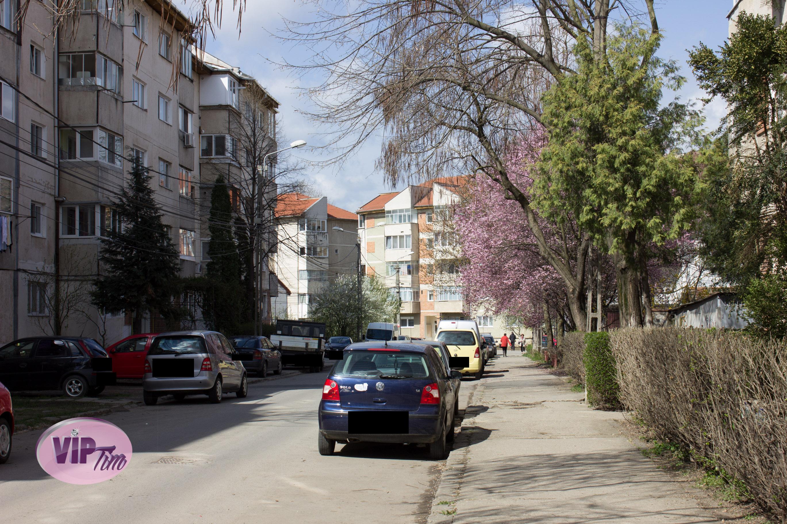 In spatele acestor tufisuri de pe strada Lalelelor a fost ucisa Erika Sursa foto: VIPTim.ro