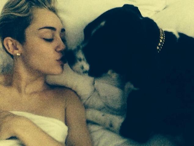 Miley Cyrus cu cateii