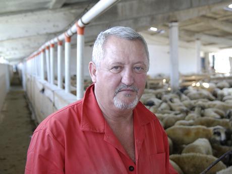 Afaceri. Ciobanul exportat anul trecut berbecuti in valoare de aproximativ patru milioane de euro (sursa agrointel.ro)