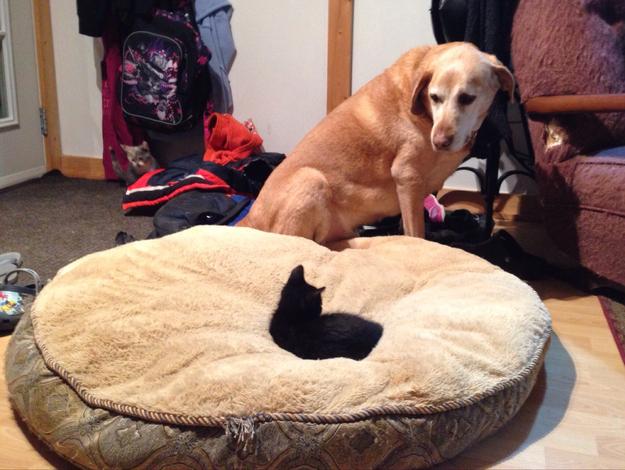 Cel mai bun prieten al omului este dat la o parte de o felina diabolica
