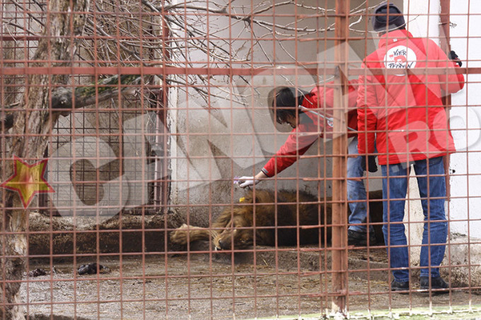 Animalele au fost luate de autoritati