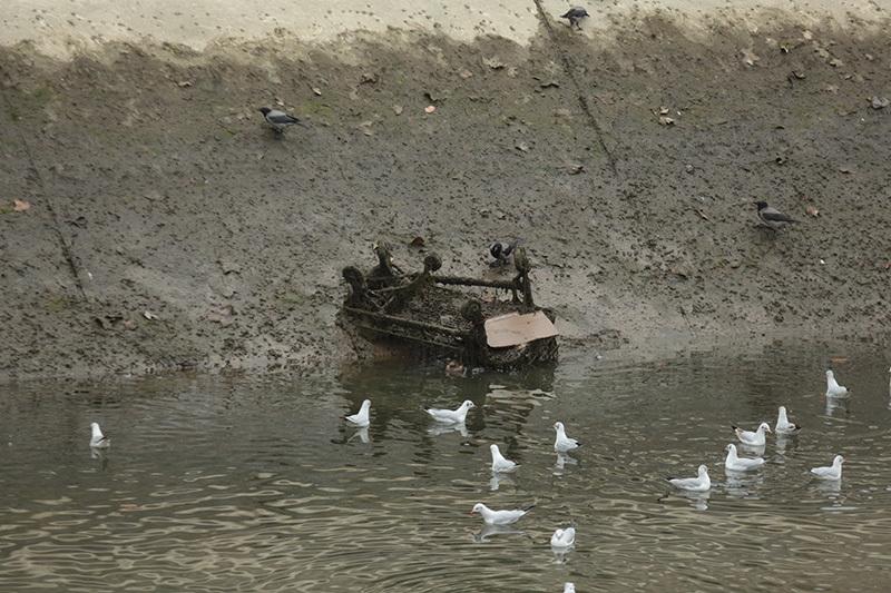 Un cărucior de supermarket a ruginit pe fundul râului