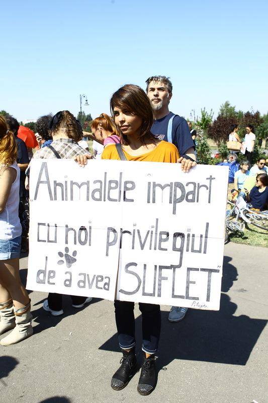 Andreea a stat in prima linie la protestul impotriva eutanasierii cainilor fara stapan si a promis ca va continua sa lupte pentru aceasta cauza