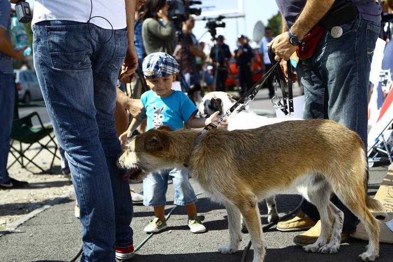 Vedete la protestul pentru protejarea drepturilor animalelor - 15