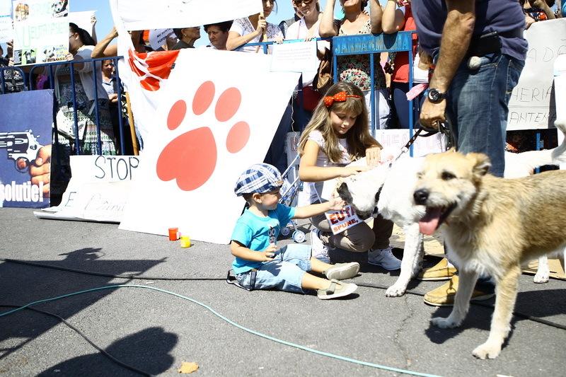 Vedete la protestul pentru protejarea drepturilor animalelor - 17