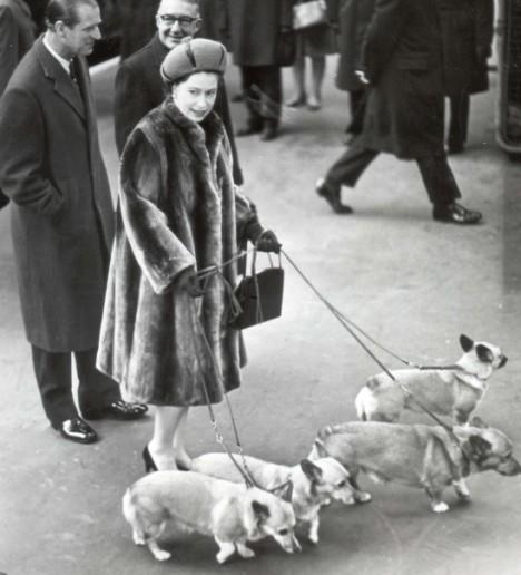 Regina Marii Britanii cu cainii la plimbare