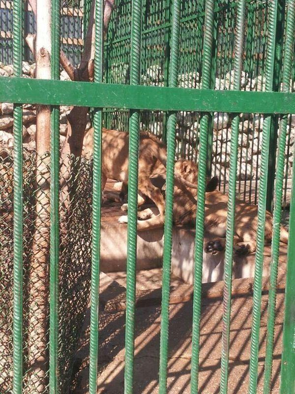 Leii lui Nutu au ajuns la o gradina Zoo din Galati