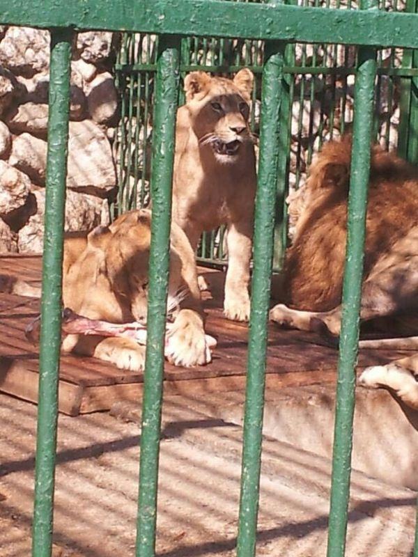 Prima data fiarele ridicate din Capitala au fost gazduite de Gradina Zoo Ploiesti