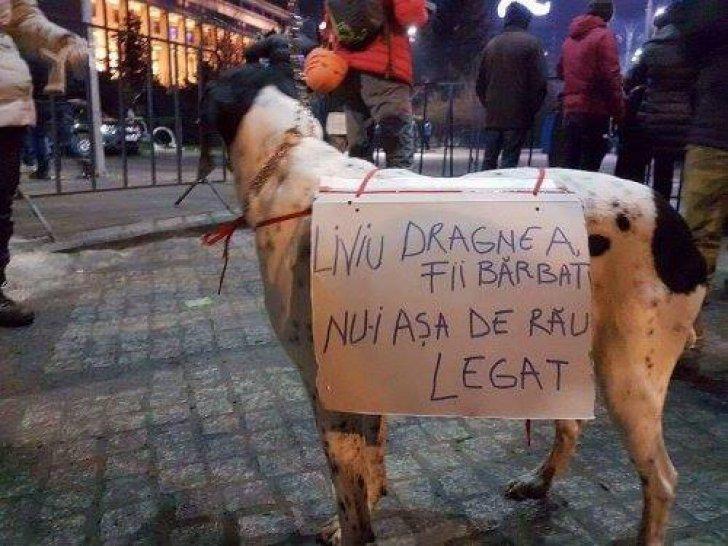 Când oamenii te înjură, dar câinii te încurajează şi îţi înţeleg durerea