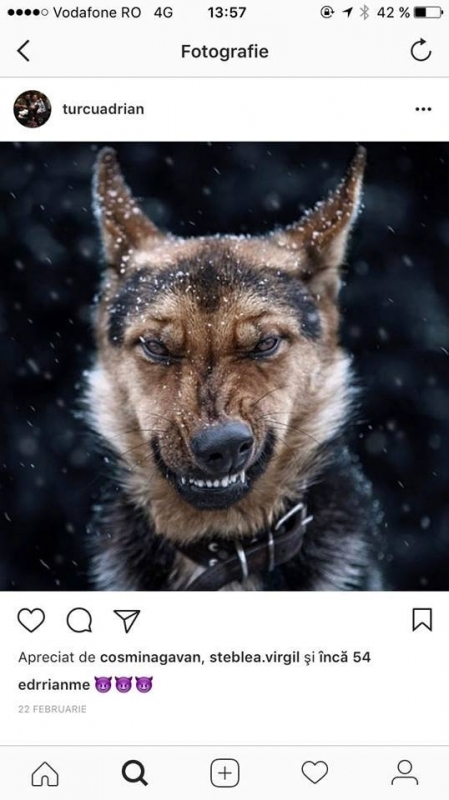 Adrian Turcu a postat pe Instagram un câine furios