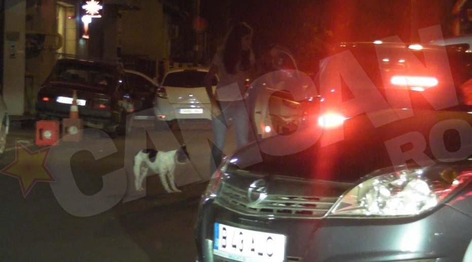 Boston Terrier-ul a fost pus pe picioare de catre medici