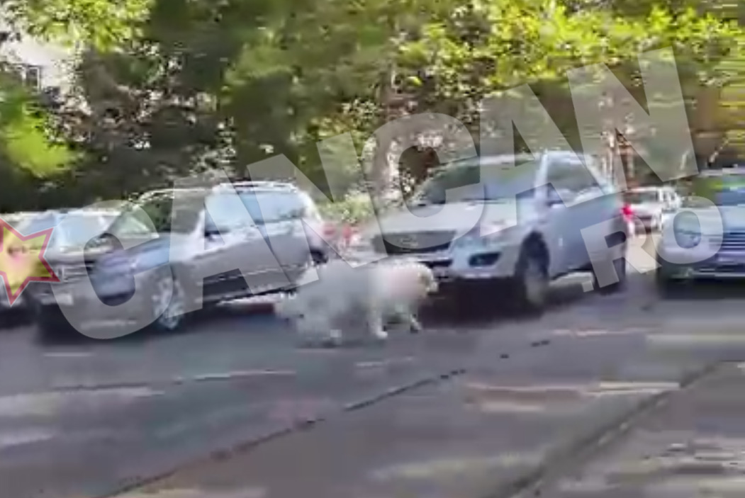 La un moment dat se hotaraste sa traverseze strada