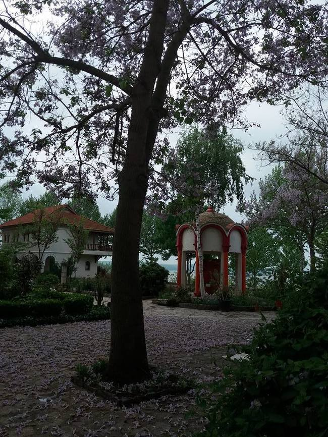 """În cimitirul în care se află înmormântat Aurelian Preda a """"nins"""" cu flori de liliac"""