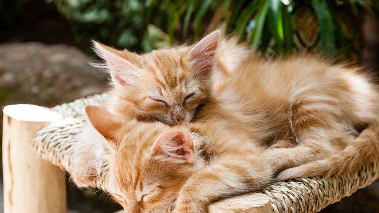 Ce înseamnă Când Visezi Pisici Interpretarea Mesajului Din