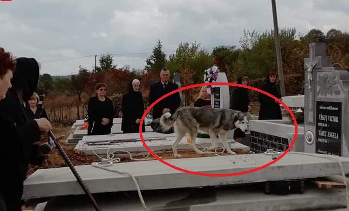 Satu Mare: momentul în care un câine a venit la înmormântarea stăpânului său! Ce a urmat: oamenii au început să plângă