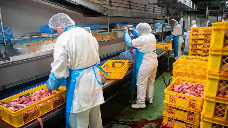 Focar de coronavirus la un abator din Germania. 1.300 de angajați au fost depistați pozitiv, jumătate dintre ei sunt români