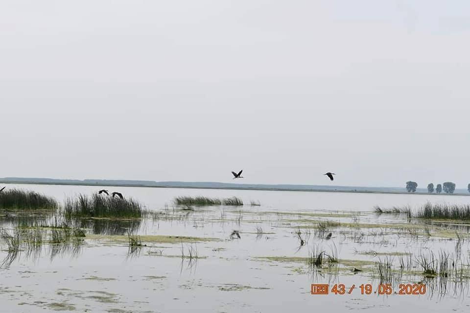 Berzele negre și-au făcut apariția pe lacul Bistreț din Dolj