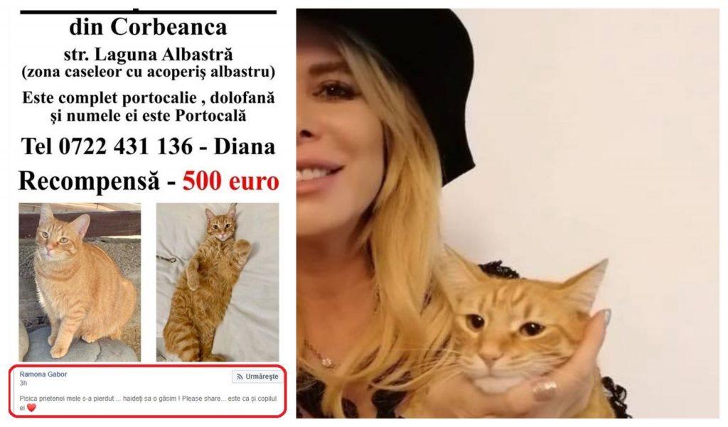 Monica Gabor a făcut apel la apropiații și fanii săi din România, cărora le-a cerut să distribuie postarea prietenei sale care și-a pierdut felina © Facebook