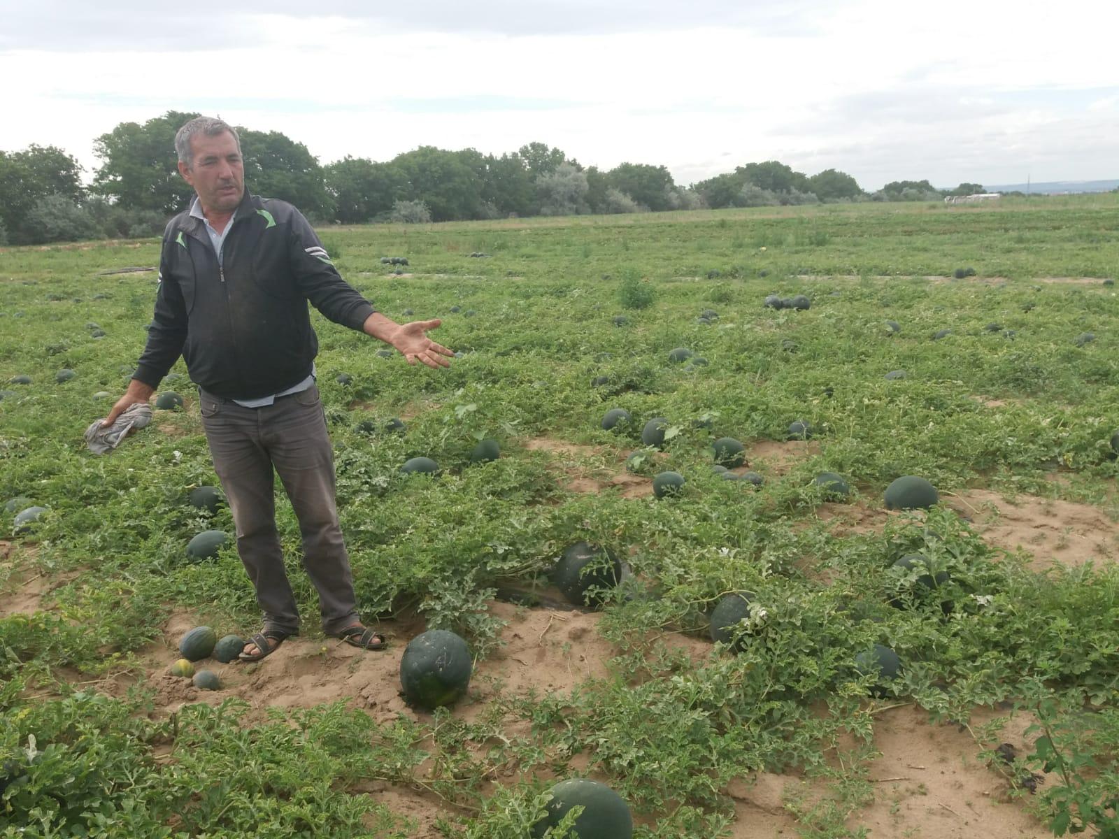 Agricultorii se plâng că nu își vor scoate nici măcar investiția
