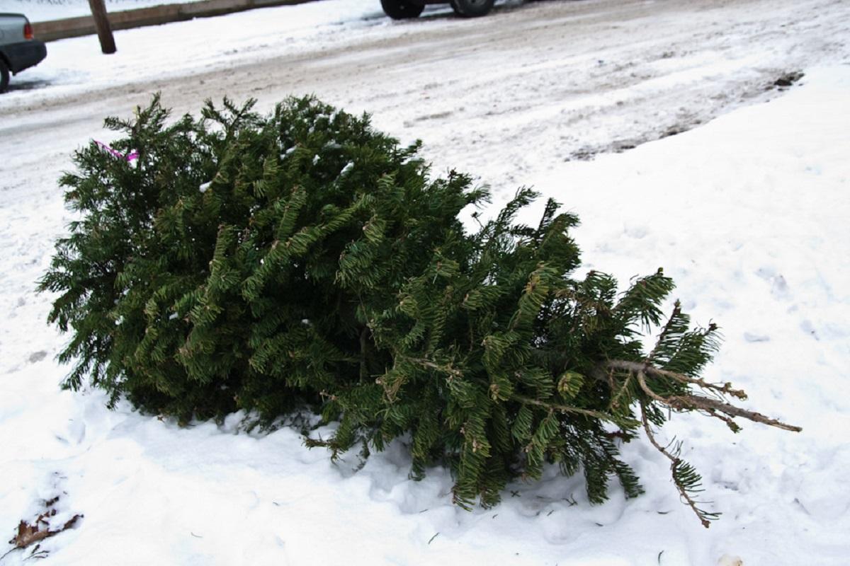 Gestul uimitor făcut de un bucureștean din Berceni. Modul în care a aruncat la gunoi bradul de Crăciun a devenit viral - Cancan.ro