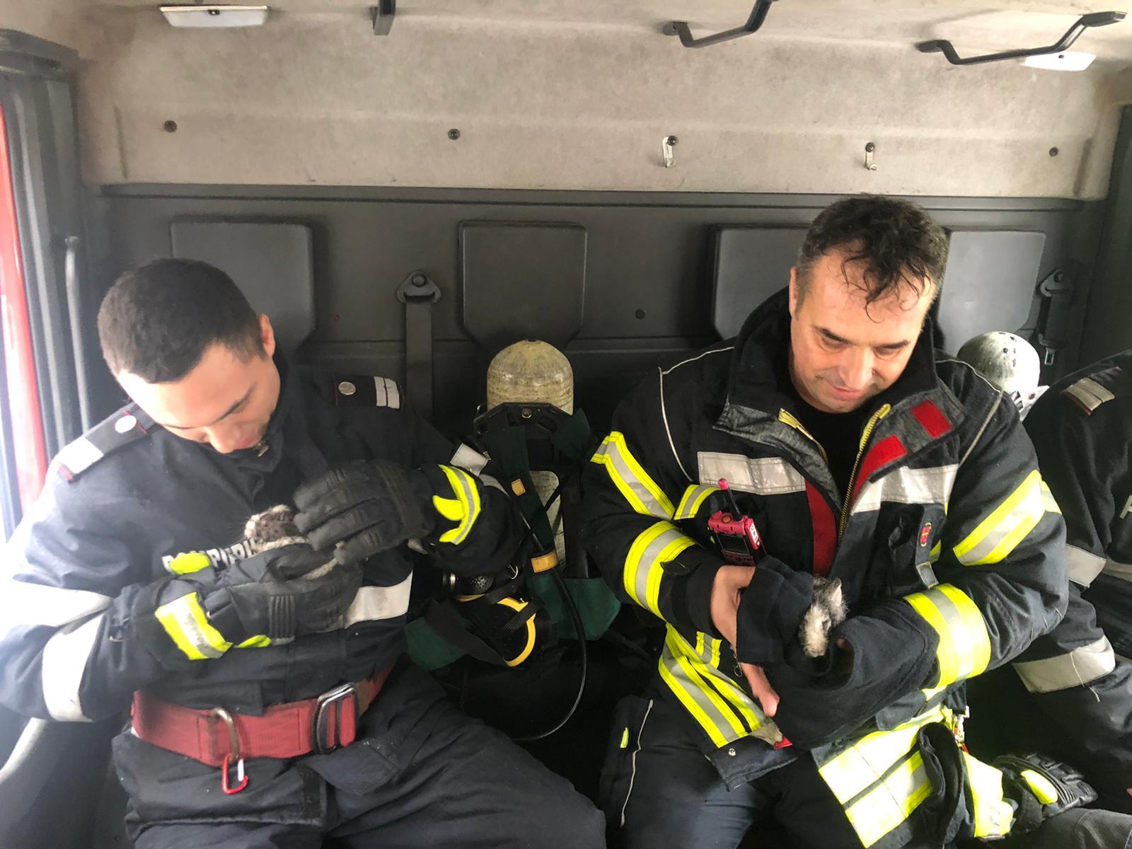 Operațiune de salvare emoționantă a pompierilor. Doi pui de iepure, scoși din flăcări. FOTO&VIDEO - Cancan.ro