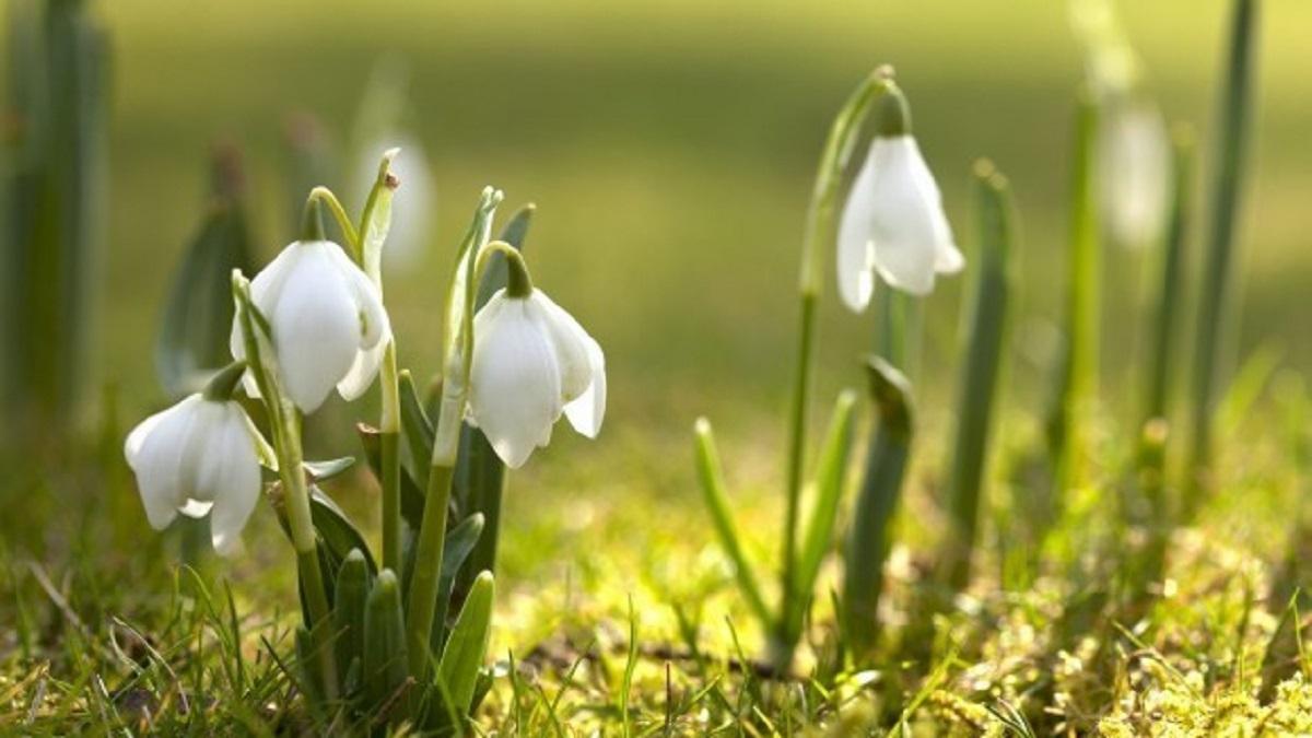 Anunțul făcut de meteorologi: când scăpăm de iarnă și când va fi prima zi de primăvară, în România - Cancan.ro