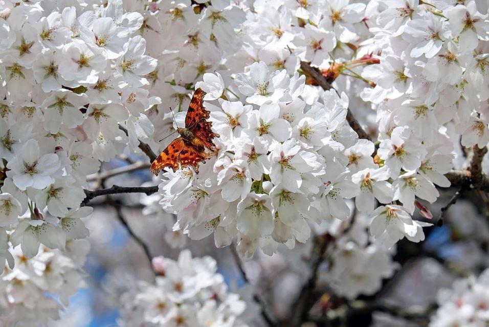 Echinocţiul de primăvară va avea loc sâmbătă, 20 martie, la ora 11:37 © pixabay.com/ro