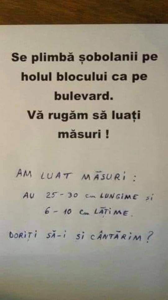 luați-o încet - Translation into English - examples Romanian   Reverso Context